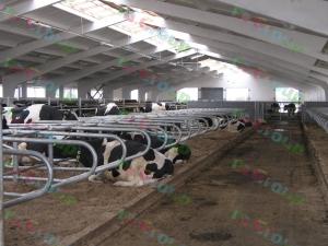 Стойла для коров